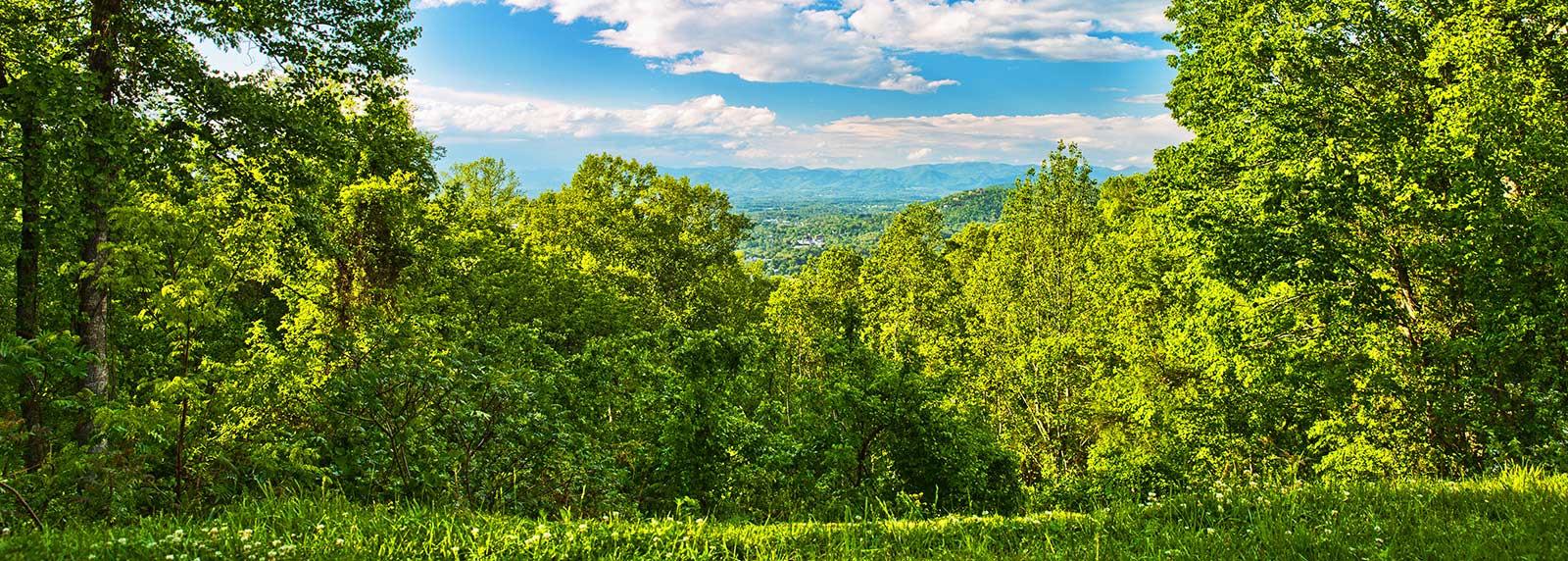 Spring-Green-View_slider1